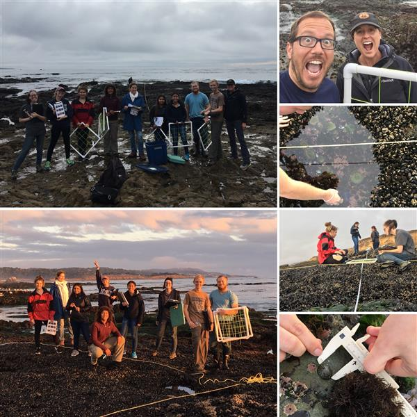 Marine Intertidal Monitoring Project